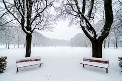 Dos benchs en parque durante nevadas Nevado Alineación del árbol Foto de archivo