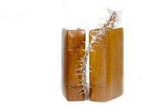 Dos biblias con las cubiertas y la rama de madera de la Cristo-espina Fotografía de archivo libre de regalías