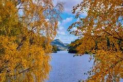 Dos birces en el borde de un lago Fotos de archivo libres de regalías