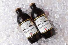 Dos botellas de cerveza dorada del cobre de Budweiser en el hielo fotografía de archivo