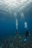 Dos buceadores exploran el arrecife de coral en HOL Chan Marine r Imágenes de archivo libres de regalías