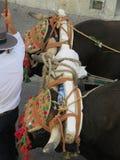 Dos bueyes que tiran del carro en el festival local del pueblo Fotografía de archivo libre de regalías