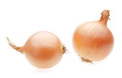 Dos bulbos amarillos de la cebolla Foto de archivo