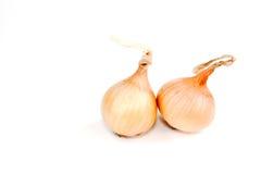Dos bulbos de cebolla Imagen de archivo