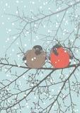 Dos Bullfinches Imágenes de archivo libres de regalías