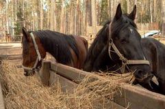 Dos caballos Imagenes de archivo