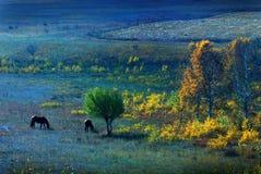 dos caballos Foto de archivo libre de regalías
