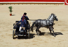 Dos caballos de arado blancos con su coche. Imágenes de archivo libres de regalías