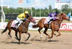 Dos caballos de carreras excelentes en el movimiento Foto de archivo libre de regalías