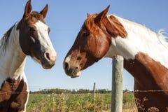 Dos caballos de la pintura Fotos de archivo