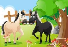 Dos caballos en la granja Imagen de archivo