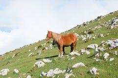 Dos caballos en la montaña Imagenes de archivo