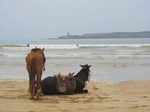 Dos caballos en la playa Fotos de archivo libres de regalías