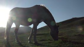 Dos caballos en la puesta del sol que comen la hierba almacen de video