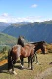 Dos caballos en las montañas Imagen de archivo libre de regalías