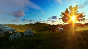 Dos caballos en prado y el árbol de la vida verdes, rayos hermosos del sol almacen de metraje de vídeo