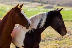 Dos caballos en un campo Foto de archivo