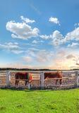 Dos caballos en un corral Foto de archivo libre de regalías
