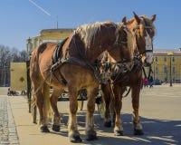 Dos caballos en un equipo con un carro en el cuadrado del palacio de St Petersburg imágenes de archivo libres de regalías