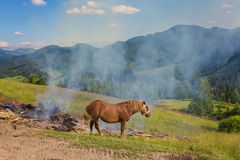 Dos caballos en un pasto Imagen de archivo libre de regalías