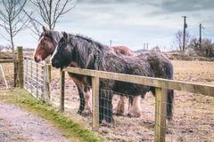 Dos caballos en un pasto detrás de una cerca Fotografía de archivo libre de regalías