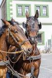 Dos caballos hermosos en el fondo de la casa Weimar, Alemania Foto de archivo libre de regalías