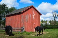 Dos caballos por una vertiente roja del granero fotografía de archivo libre de regalías