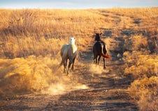 Dos caballos que galopan cuesta arriba Imágenes de archivo libres de regalías