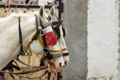 Dos caballos que se unen imágenes de archivo libres de regalías