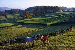 Dos caballos retroiluminados Fotos de archivo