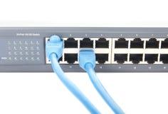 Dos cables azules Cat-5 tapados en el interruptor de red Foto de archivo libre de regalías