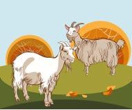 Dos cabras al pasto stock de ilustración