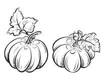 Dos calabazas. libre illustration