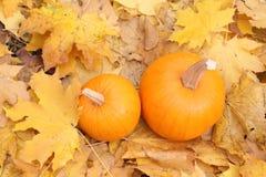 Dos calabazas anaranjadas en las hojas amarillas Fotografía de archivo libre de regalías