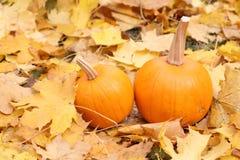 Dos calabazas anaranjadas en las hojas amarillas Fotos de archivo libres de regalías