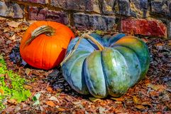 Dos calabazas decorativas por la pared de ladrillo en las hojas de otoño Fotografía de archivo libre de regalías