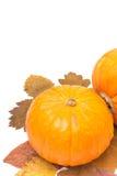 Dos calabazas en las hojas de otoño aisladas en blanco Fotografía de archivo libre de regalías
