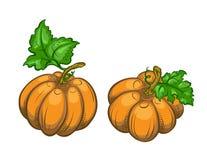 Dos calabazas maduras. libre illustration