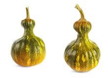 Dos calabazas verdes y color amarillo en un fondo blanco Foto de archivo