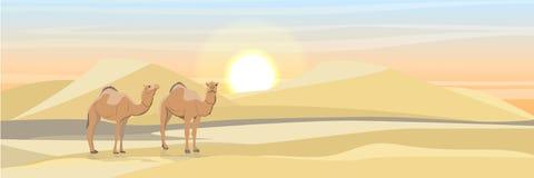 Dos camellos one-humped en el desierto con las dunas de arena libre illustration