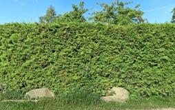 Dos cantos rodados grandes del granito en la base de un seto verde Imagenes de archivo
