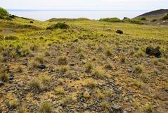 Dos Capelinhos van de vulkaan Stock Fotografie