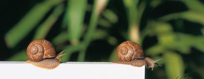 Dos caracoles Imágenes de archivo libres de regalías