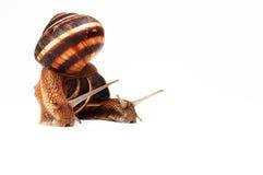 Dos caracoles divertidos imagen de archivo