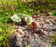 Dos caracoles en las piedras imagen de archivo