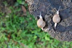 Dos caracoles en un tocón de árbol Fotos de archivo libres de regalías