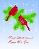 Dos cardenales rojos que se sientan en abeto verde ramifican, la nieve blanca, en azul libre illustration