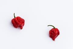 Dos Carolina Reaper Hot Chilli Peppers en blanco Imágenes de archivo libres de regalías