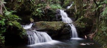Dos cascadas en selva Foto de archivo libre de regalías