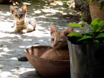Dos Cat Kittens linda adorable imagen de archivo libre de regalías